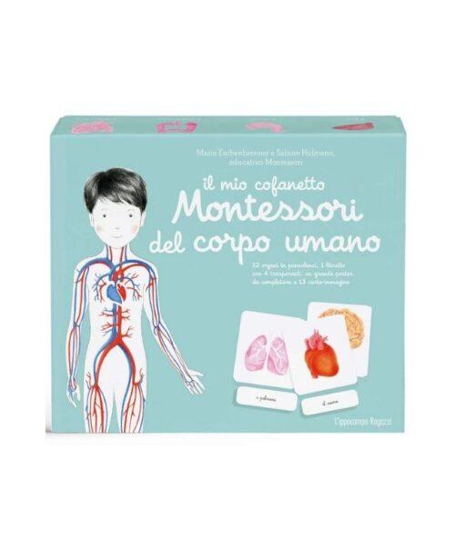 il-mio-cofanetto-montessori-del-corpo-umano-l'ippocampo