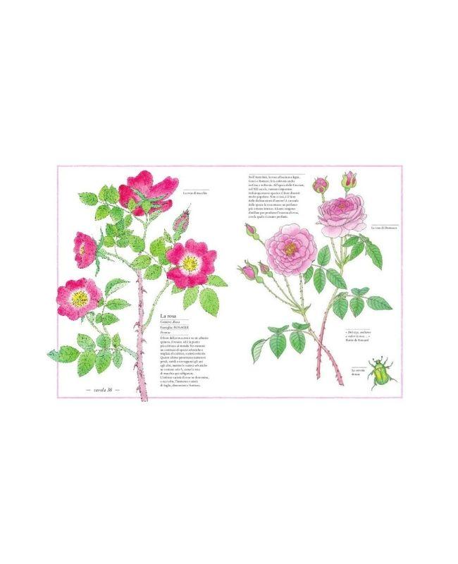 inventario-illustrato-dei-fiori-ippocampo2