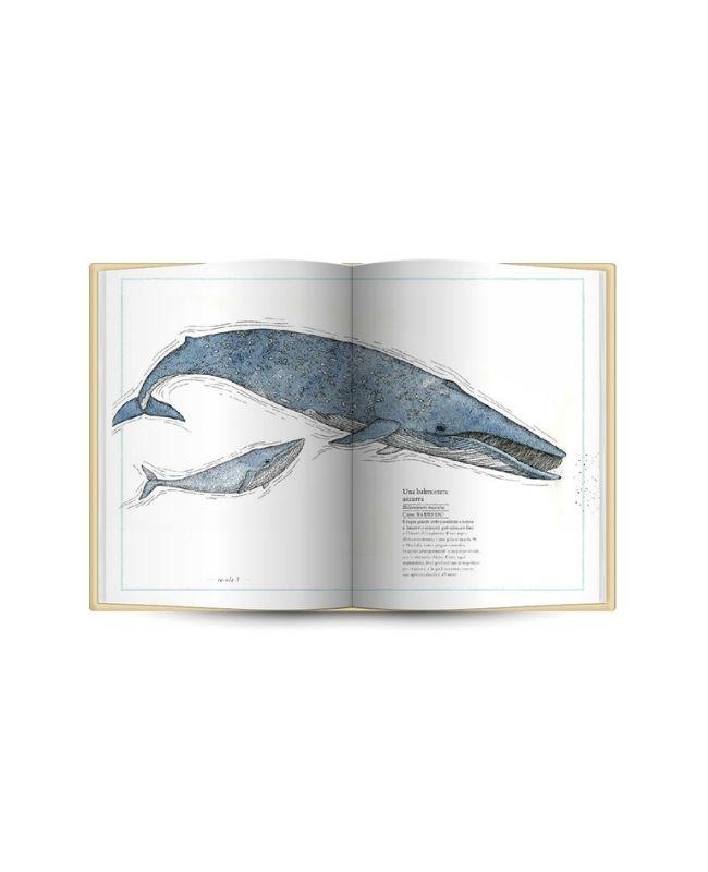 inventario-illustrato-del-mare-ippocampo2