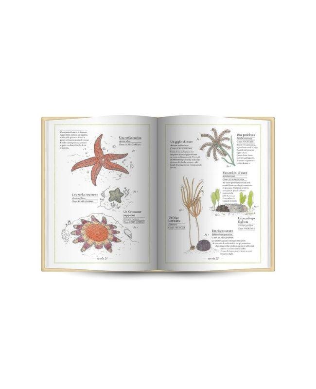 inventario-illustrato-del-mare-ippocampo3