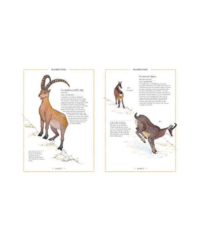 inventario-illustrato-della-montagna-ippocampo2