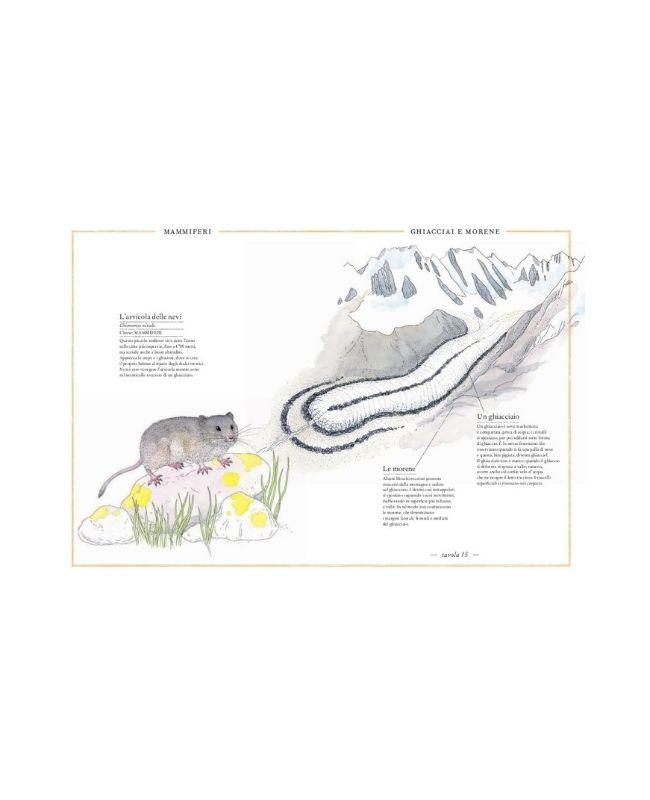 inventario-illustrato-della-montagna-ippocampo3
